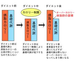 ダイエット後にも基礎代謝が低下した状態が継続することを示したグラフ