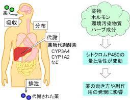食品・サプリメントと薬物の相互作用