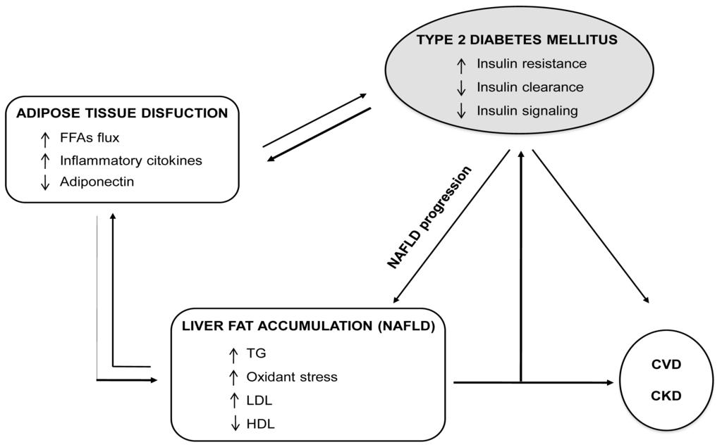 糖尿病がNAFLDの線維化進行因子であることを示す図