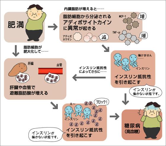 肥満と糖尿病の病態形成の深い関係を示す図