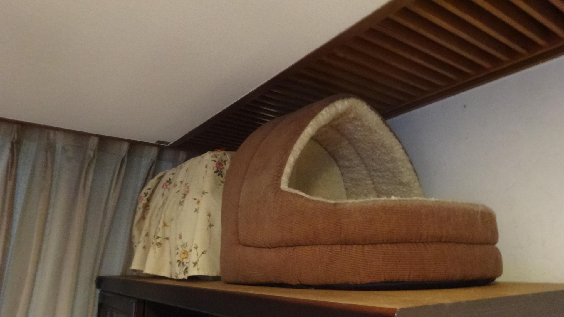 居間の隅の本棚の上に置かれたネコハウス