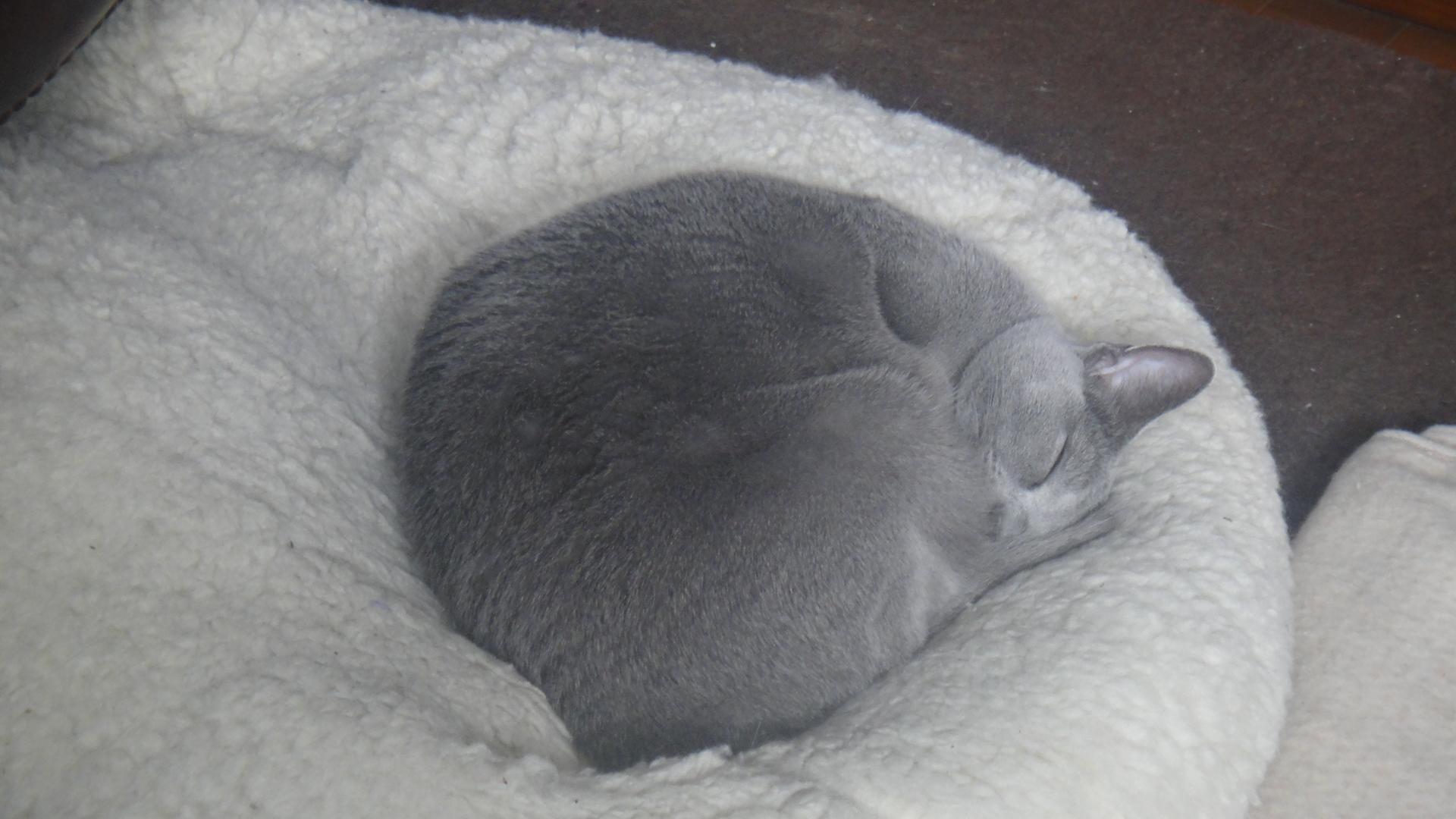 暖かくて柔らかいクッションの上で寝るデイジー