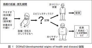 成人病の胎児起源説とエピジェネテイクスの説明図