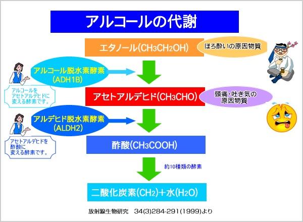 アルコール代謝へのADH ALDHの関与の説明図