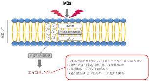 刺激により細胞膜内の多価不飽和脂肪酸からエイコサノイドが合成される過程を示した図