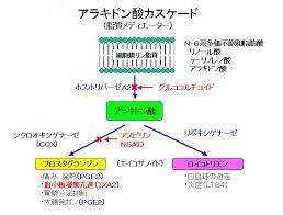 プロスタグランジン ロイコトリエンの合成過程を示した図