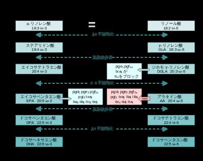 n-3系不飽和脂肪酸 n-6系不飽和脂肪酸からのエイコサノイド産生過程を示す図