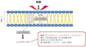 細胞膜のリン脂質の多価不飽和脂肪酸からエイコサノイドが産生されるのを示した図