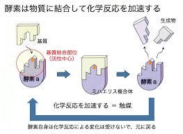 酵素の作用について説明した図