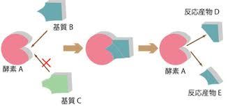 基質特異性を説明した図