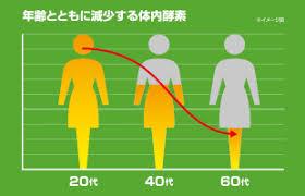 加齢により体内酵素量が減少することを示すグラフ