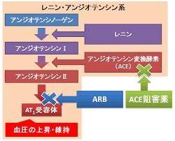 アンジオテンシン変換酵素阻害薬の働きを示す図