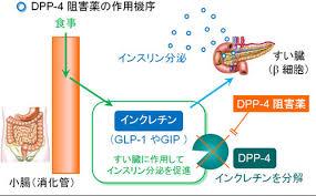 DPP-4 阻害薬の働きを示す図