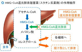 HMG-CoA還元酵素阻害薬の働きを示す図