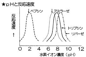 至適pHについて説明した図