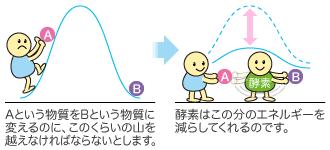 酵素の働きにより活性化エネルギーを抑えられることを示す図
