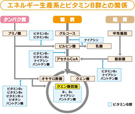 エネルギー産生への補酵素の関わりをまとめた図