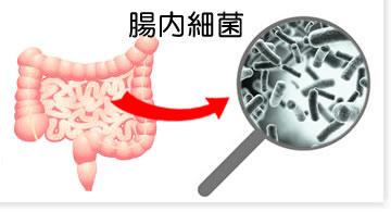腸内細菌の顕微鏡像