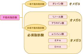 不飽和脂肪酸の分類のまとめ