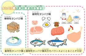タンパク質が多く摂れる食品を示した図