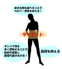 脂質やタンパク質を食べることの重要性を示した図