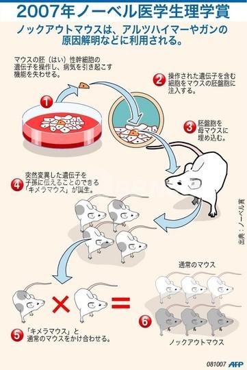 ノックアウトマウスの説明図