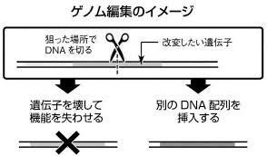 ゲノム編集の説明図