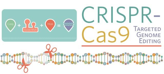 CRISPR/Cas9の説明図