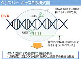 CRISPR/Cas9の模式図