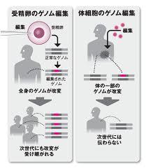 体細胞 受精卵へのゲノム編集の影響の違いを示す図