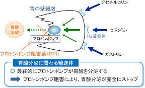 PPIの作用機序を説明する図