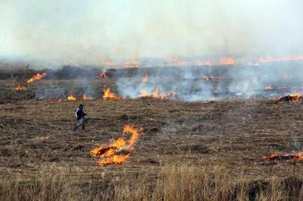 野焼きの様子