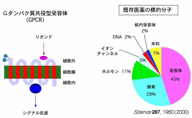 G蛋白共役受容体の説明図