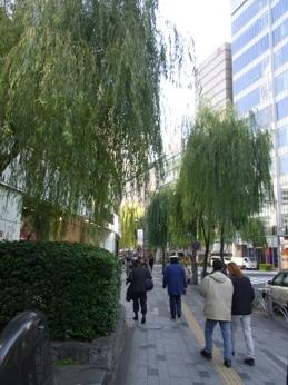 銀座の街路の柳の木の写真