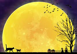 満月の夜に散歩するネコ