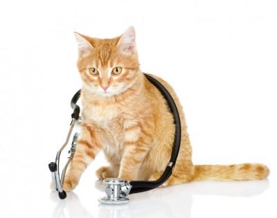 聴診器を身につけたネコ