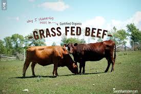 草だけで育てられている牛