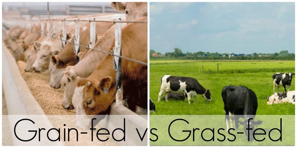 グラスフェッド グレインフェッドの比較を示す図