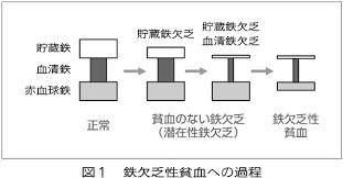 潜在的鉄欠乏状態から鉄欠乏に進行する過程を示す図