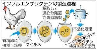 ワクチンの製造過程を示す図