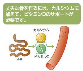 ビタミンDが丈夫な骨に必要なことを示す図