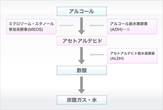 アルコール代謝におけるMEOSの関与を説明する図