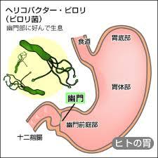 ピロリ菌の解説図