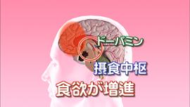 脳内のドーパミンネットワーク