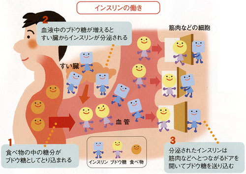インスリンの働きを示す図