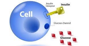 インスリンの受容体への結合を示す図