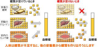 糖新生の説明図