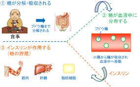 インスリンが作用する臓器をまとめた図