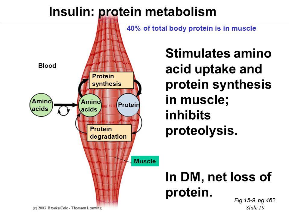 インスリンは骨格筋でアミノ酸の取り込みを促進することを示す図