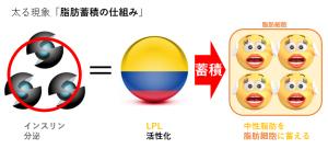 インスリンが脂肪組織の血管内皮細胞のLPL活性を上昇させるので 脂肪細胞内に中性脂肪を貯めやすくすることを示す図